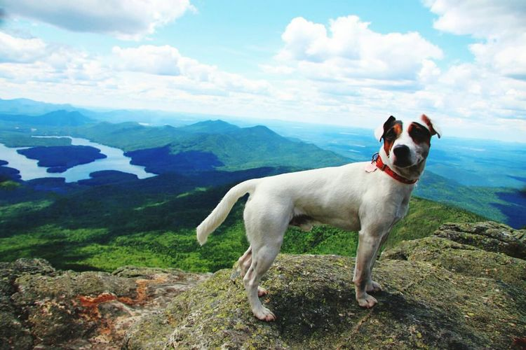 Jack russell terrier on adirondack mountains against cloudy sky