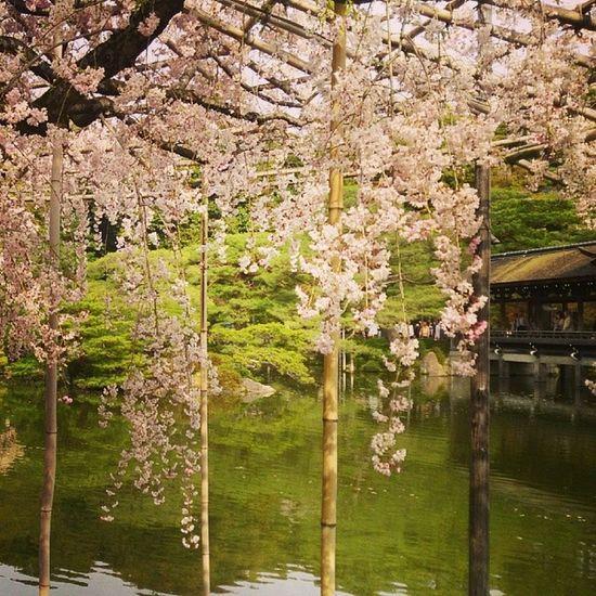 Japan Japan,koyto Koyto 日本,京都 日本 京都 平安神宮