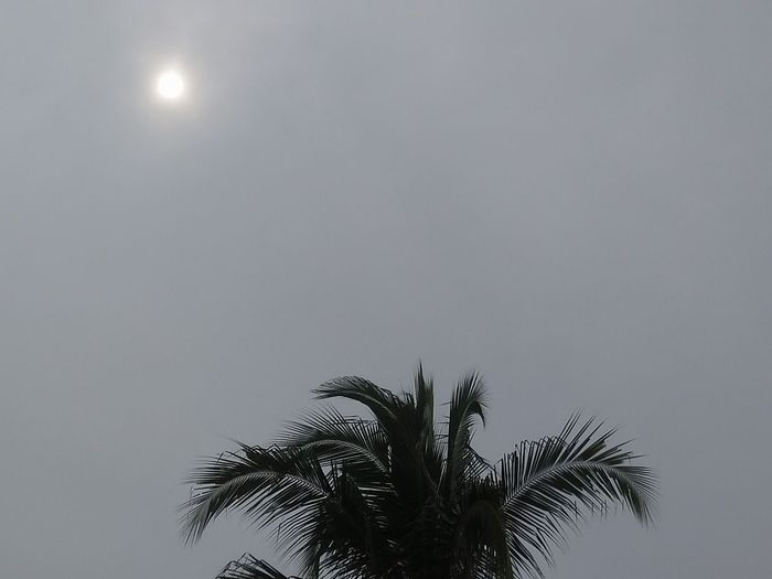 Palm Tree Tree Low Angle View Silhouette Sky Growth Nature Tree Trunk No People Outdoors Beauty In Nature Day Sun ☀ Cloudy Day Mendung Tak Berarti Hujan.... Mendung,