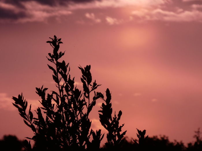 Low angle view of silhouette plants against romantic sky
