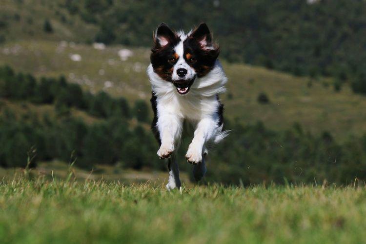 My dog Aussiephotos Aussiephotos Aussie Friendship Reliability Pets Portrait Sunset Happiness Dog Cheerful Beauty EyeEmNewHere