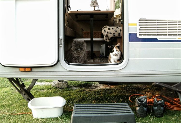 Cats Sitting In Travel Trailer On Field