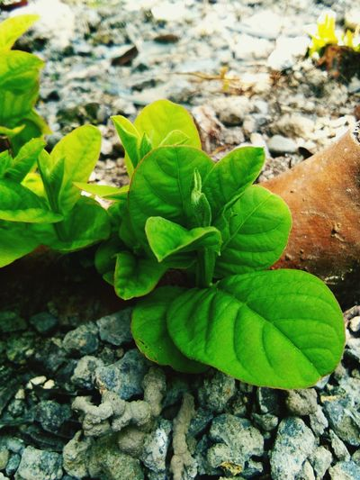 Leaf Close-up Plant Green Color Leaves Young Plant Growing