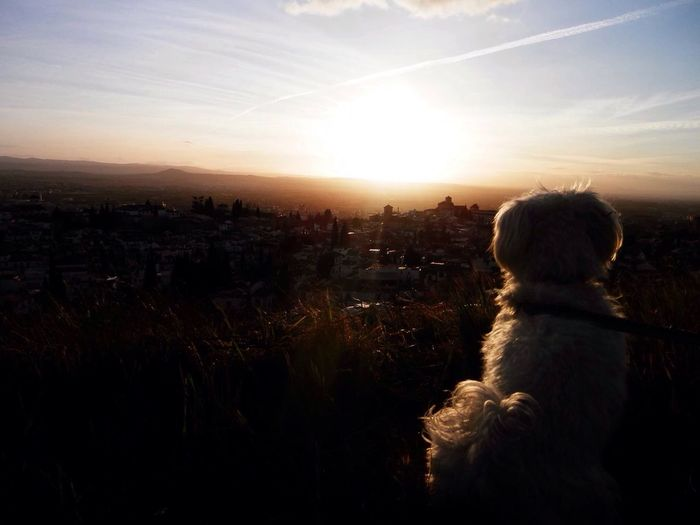 My love Granada, Spain Sunset Dog Beauty Nature