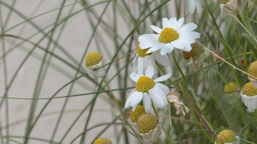EyeEm Best Shots Flowerporn Flowers Nature_collection