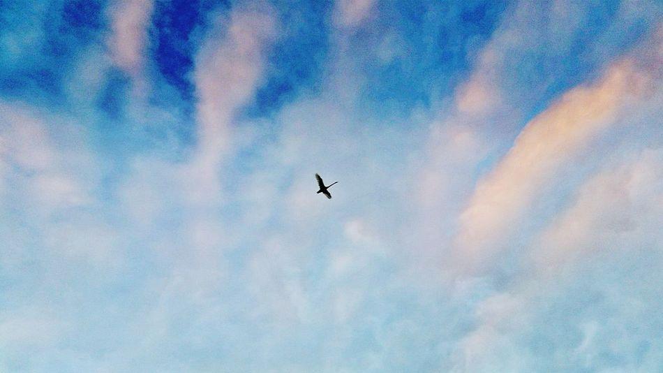 Flying Solo Lone Bird Alone Time Beautiful Sky