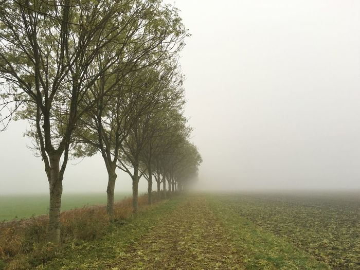 Trees on grassy field against sky during foggy weather