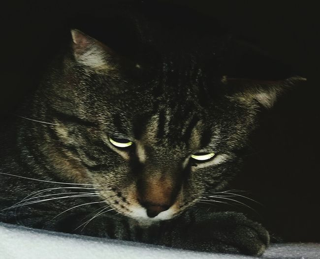 mad kitty Evil Cat Eye Em Cats .