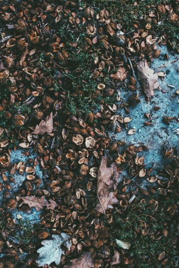 High angle view of maple leaves fallen in forest