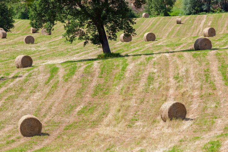 Straw Bales Straw Field Marche Italy Green Landscape Nature Outdoors Agriculture Tural Meadow Rural Scenery Day Light Nobody Background Copy Space Tree Plants