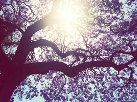Spring is here, the Jacarandas are blooming! First Eyeem Photo