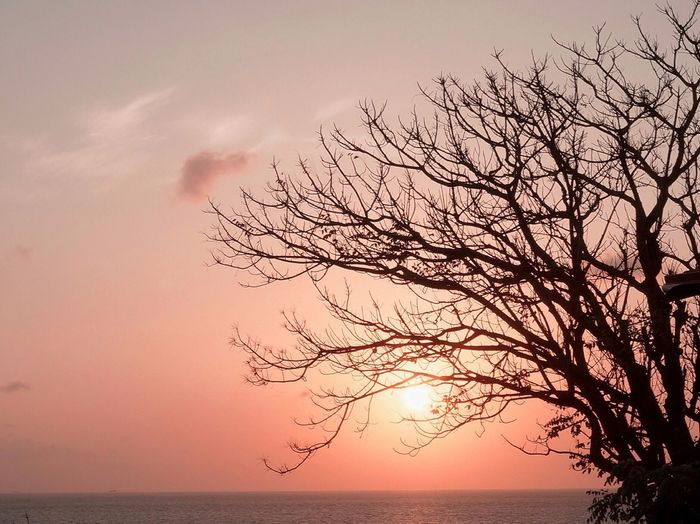 Silhouette bare tree by sea against sky during sunset