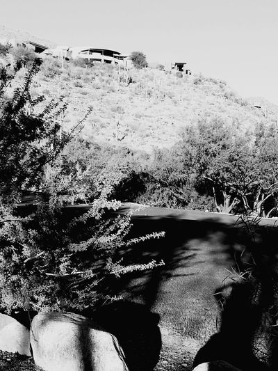 Tuscon, Az Desert Beauty Lush Desert Home With A View EyeEm Best Shots - Black + White Silouette Light And Shadow