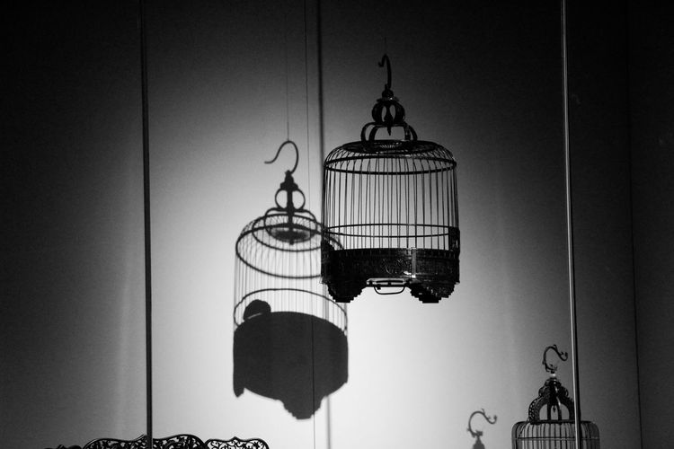 Lighting Equipment Hanging Indoors  No People Birdcage Wall - Building Feature Cage Electric Lamp Architecture Day Metal Electricity  Pendant Light Built Structure Illuminated Home Interior Nature Sky Bird Nest Seattle Art Museum
