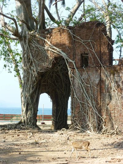 Ruins Building
