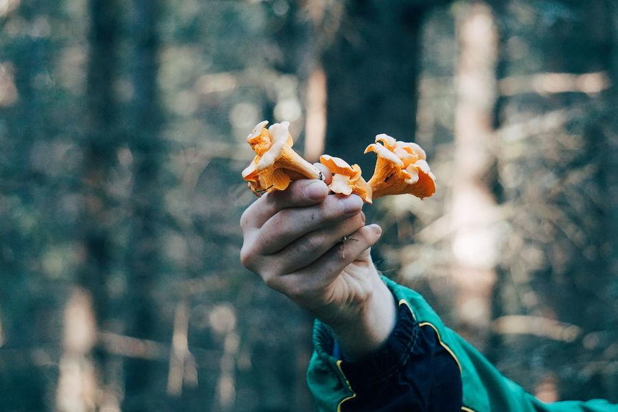 picking mushrooms Forest Wild Wildlife & Nature Picking Mushrooms Human Body Part Human Hand EyeEm Selects Human Hand Eating Holding Forest Close-up Food And Drink Fungus Mushroom Fall Lichen Moss Wild Fallen Leaf