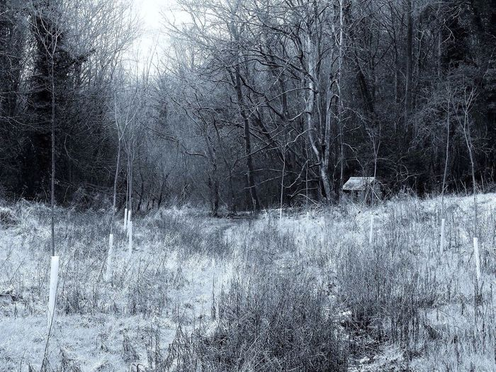 The twighlight zone Wood Scenery Shack Shed Landscapes With WhiteWall Trees Nature Grey Bark Silence Eery Dwelling