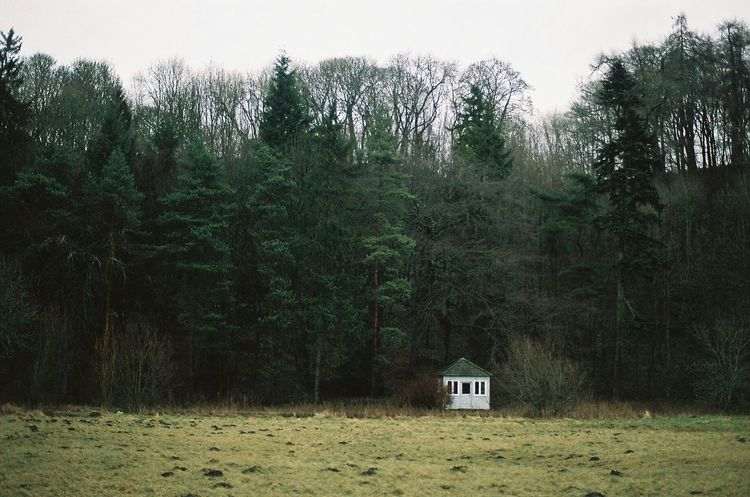 Contax167mt Carl Zeiss Planar T* 1.7/50mm Log Cabin Log Cabin And A Field Log Cabins Log Cabin Exterior Cosy Place Wilderness Camping Outdoors Tree Day Nature Glamping Creepy Forest Forest Life Woodlands Woods
