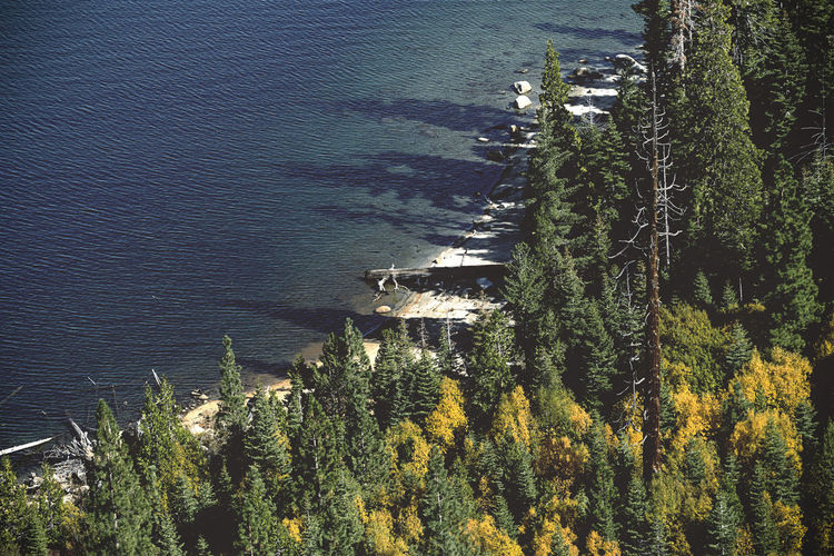 Plant Water Tranquil Scene Beauty In Nature High Angle View Lake Tahoe Landscape Cove Blue Fall Colors Nature Tranquility Non-urban Scene Sunlight Outdoors No People EyeEmNewHere
