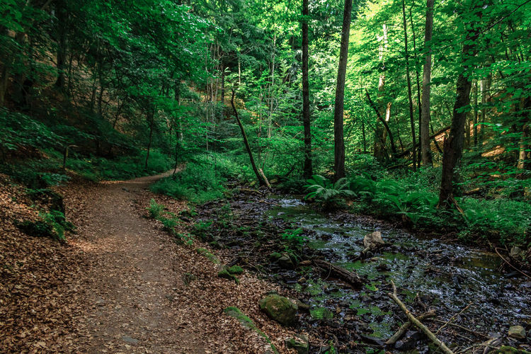 The path Beauty In Nature Day Footpath Forest Green Green Color Growth Idyllic Landscape Lush Foliage Narrow Nature No People Non Urban Scene Non-urban Scene Outdoors Plant Remote Scenics The Way Forward Tranquil Scene Tranquility Tree Tree Trunk WoodLand