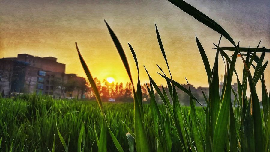 #farmlust EyeEmNewHere Love Yourself The Graphic City Sunset Nature Orange Color Beauty In Nature Grass Scenics Rural Scene Field