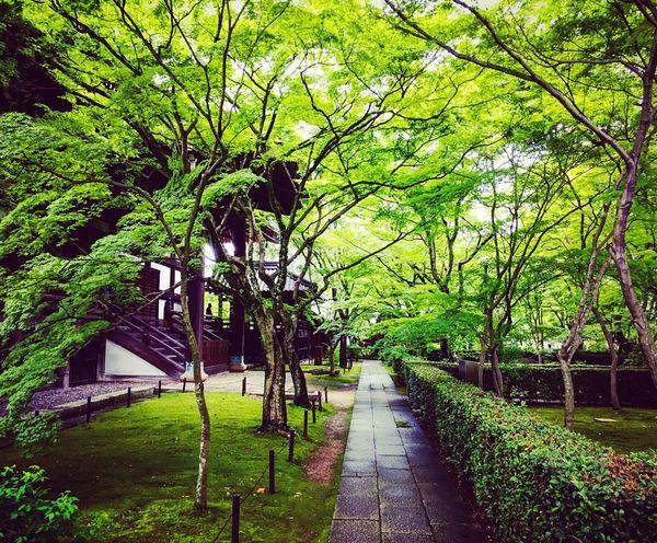 真如堂 真正極楽寺 京都 Kyoto Kyotojapan Enjoying Life