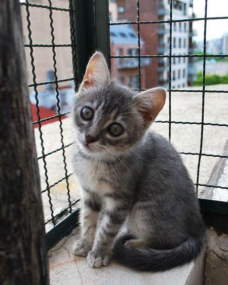 Linda Merlina Babycat Cute Beautiful Lovely Photo Pic Photocat Instacute Instaphoto Instacat