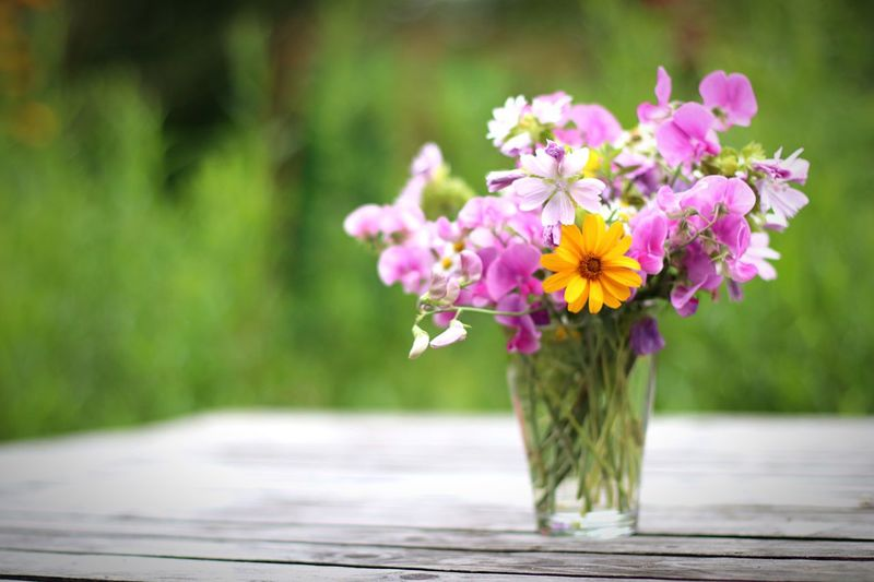 Flowers Blumen