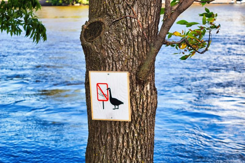 Feeding The Birds Sign Communication Warning Sign Tree Trunk Tree Trunk Water Nature Plant No People Day Forbidden Guidance Information Focus On Foreground Outdoors Western Script Text Lake Message Wooden Post Geese