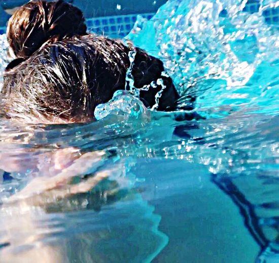 Water Splashing Swimming Pool Swimming Reflection Motion Waterfront Day Animal Themes Outdoors No People Nature Close-up Mammal
