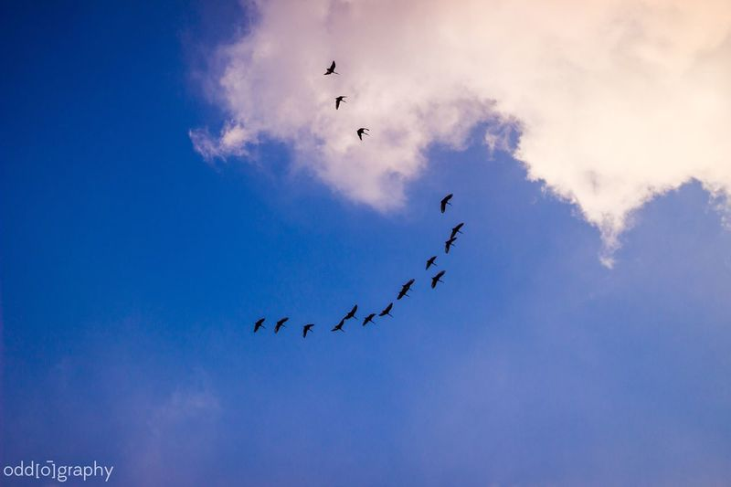 Birds Flying High Oddography Skies Clouds Clouds And Sky