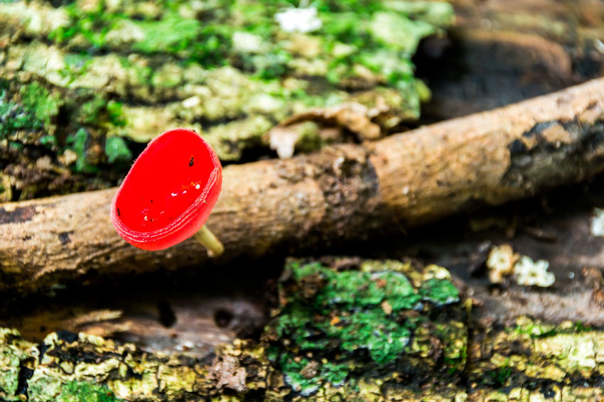 Mushroom Champagne Nature Thailand Backgrounds Beauty In Nature Forest Mushroom