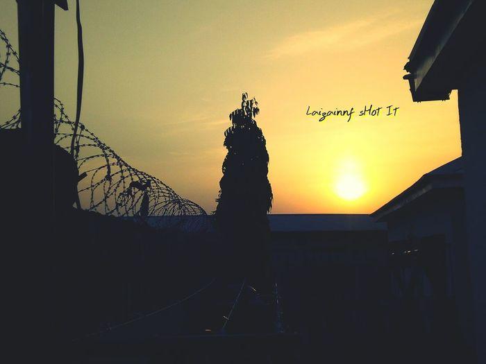 Compound Masquerade Tree 6:15am Sunrise City Sky