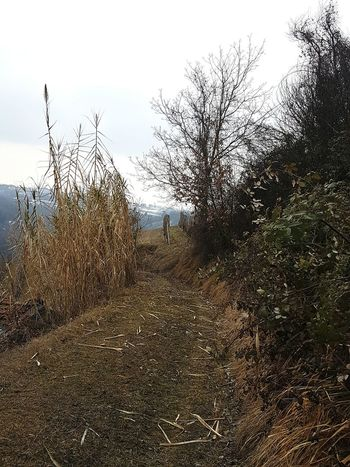 Wild Grass Spontaneity Natural Textures Winter Landscape Atmospheric Mood Foggyday Walking In The Nature In The Nature Peace And Quiet Silence Of Nature Piedmont Langhe Growth Walking In The Hills Calmness Landscape Tranquility Bare Trees Silhouettes Foggy Weather Autumn Colors