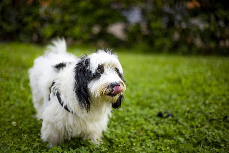 lillo cane bau Animal Body Part Animal Hair Animal Head  Animal Photography Animal Themes Blur Bokeh Bokeh Photography Day Dog Dog Love Dogs Dogslife Dog❤ Domestic Animals Focus On Foreground Happiness Happy Mammal Nature No People Outdoors Pets Selective Focus Smile