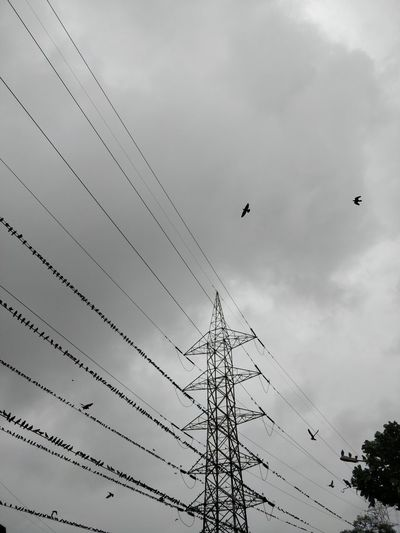 Animal Animal Themes Animal Wildlife Animals In The Wild Bird Cable Cloud - Sky Connection Electricity  Flock Of Birds Flying Fuel And Power Generation Group Of Animals Low Angle View Mid-air Nature No People Outdoors Power Line  Power Supply Sky Technology Vertebrate