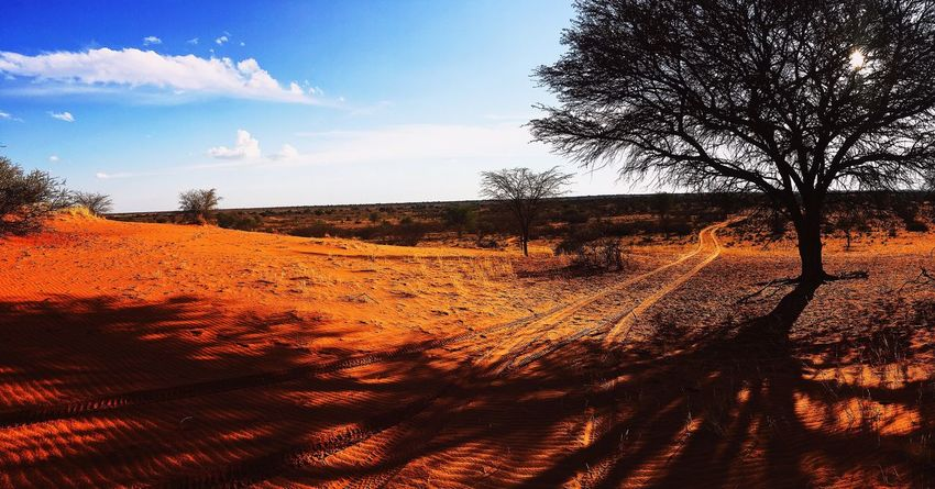 Landscape Sky Nature Tree Sand Tranquility Beauty In Nature Scenics Outdoors Sunlight No People Day Sand Dune Arid Climate Desert Beauty In Nature Travel Discover Africa EyeEmNewHere Kalahari Africa African Nature Safari The Great Outdoors - 2018 EyeEm Awards The Traveler - 2018 EyeEm Awards