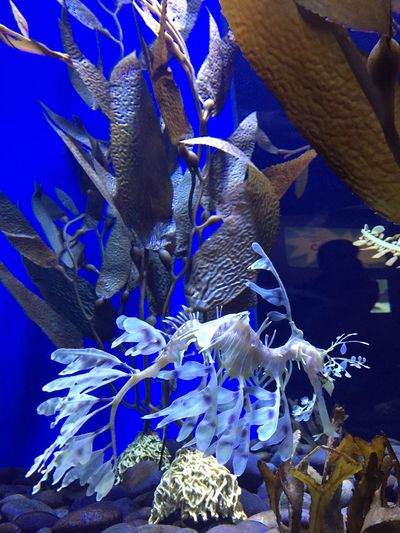 Magical Underwater Blue Animal Themes Sea Life Swimming Fish Large Group Of Animals No People UnderSea Animals In The Wild Indoors  Aquarium Nature Close-up Beauty In Nature Sea Water Day