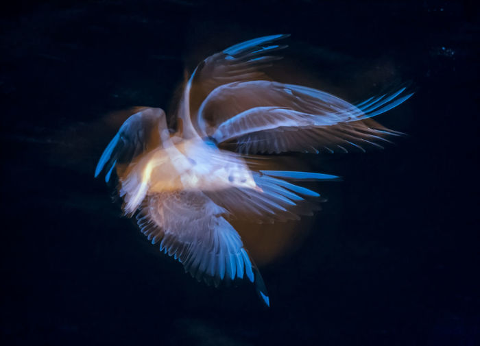 Seagull flying over water at night illuminated by flash