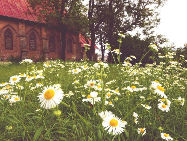 the old church Church EyeEm Eye4photography  EyeEm Nature Lover Taking Photos Leica D-lux Typ109 Wild Flowers UrbanSpringFever