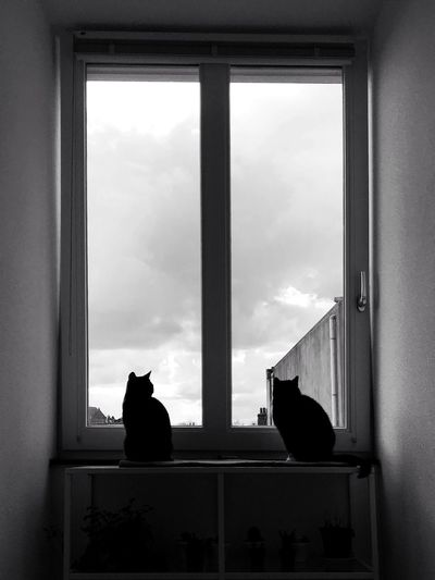 Cats Window Sky Cloud - Sky Architecture Day Transparent Glass - Material No People Indoors  Window Frame