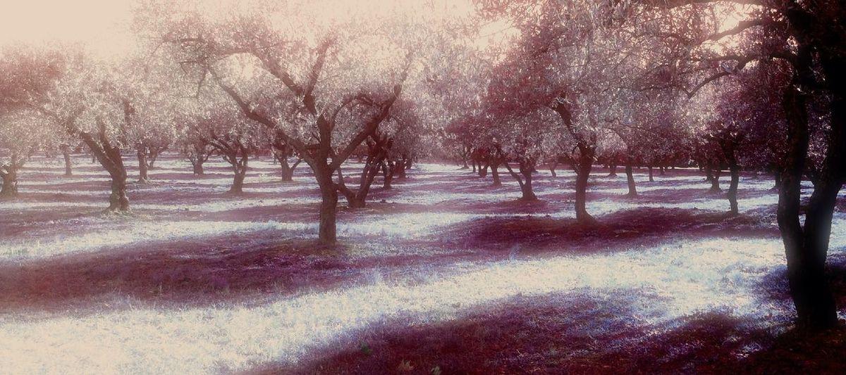 Fairy field at Montpellier, Fr Fairy Field