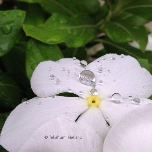 like a jewel! OneCam Rain Drops Flower