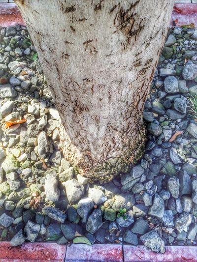 Hello World Tree