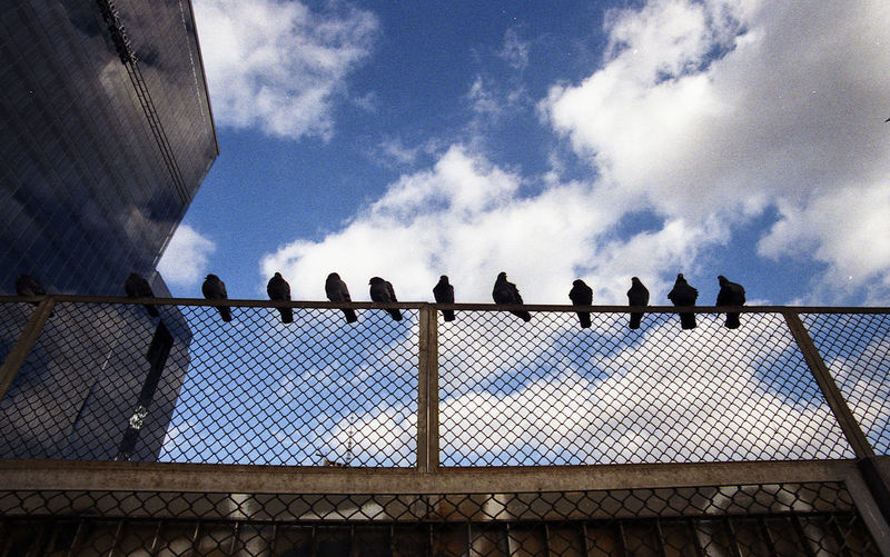 Low angle view of birds on chainlink fence against sky