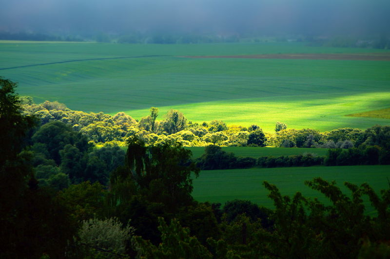Sonny spot on the fields Agriculture Beauty In Nature Day Field Fields Green Color Growth Landscape Nature No People Outdoors Pilis Pilisszántó Rural Scene Scenics Sky Spotlight Tranquil Scene Tranquility Tree