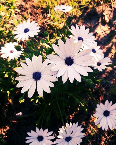 Flower Flower Head Beauty In Nature Nature Springtime Relaxing Beautiful Green Happiness Enjoying Life Violet Spring Flowers Nature Photography Beautiful Nature Spring Colours Violet Flowers Taking Photos Hello World Check This Out Spring 2016 Spring Is Coming  Petal Fragility