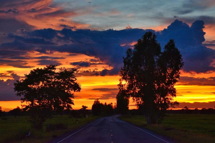 Silhouette trees by road against orange sky