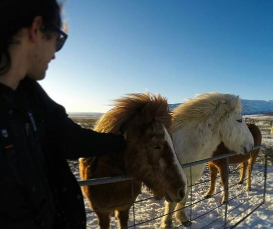 Gently 👐🐴 Ever hear of spitting horses? 😂 Me neither - these guys were too nice! _______ ____ __ _ Icelandic Islandia Iceland Goldencircle Furryhorse Reykjavik Backpacking Horse Animals Landscape Traveliceland Brilliantmoments Adventure Sunset Gopro Goproanimals Besomebody Travel Horsesofinstagram