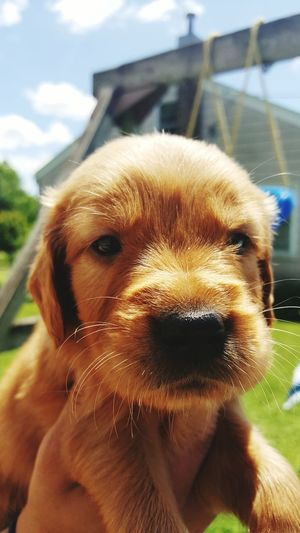 Puppy Relaxing Taking Photos Puppy Love ❤ Enjoying Life Pet Dog❤ Outdoors Outdoor Photography Cute Pets Cute♡ Hello World First Eyeem Photo
